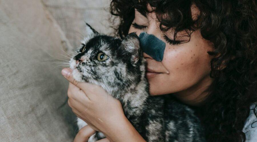 Nueve señales que confirman que tu gato te quiere mucho