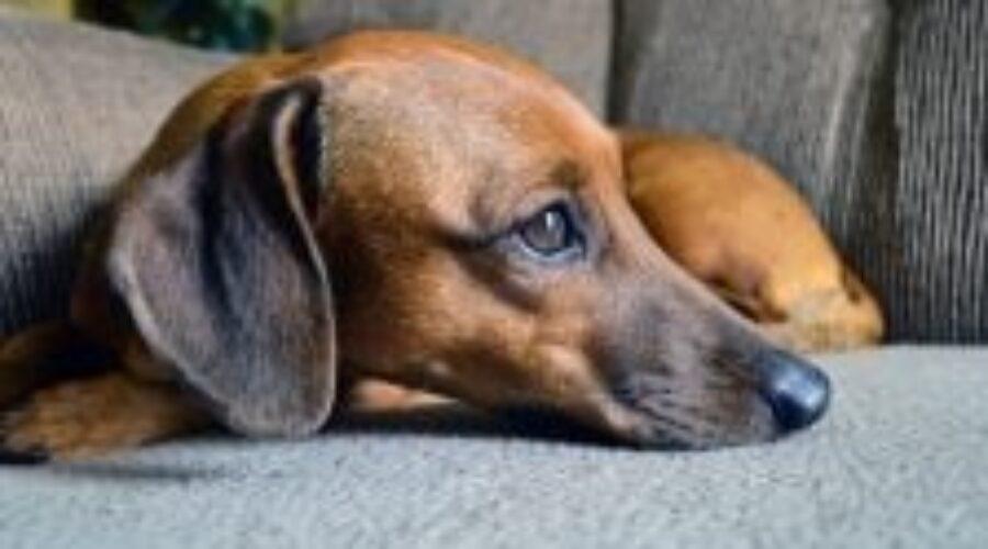 3 motivos que explican por qué el perro se lame las patas