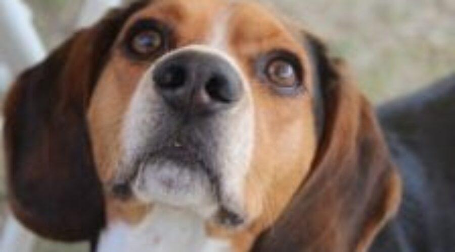 Un estudio demuestra que los perros saben leer las expresiones faciales