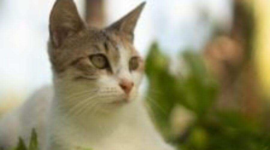 ¿Cómo evitar que el gato sufra un golpe de calor en verano? Los mejores consejos