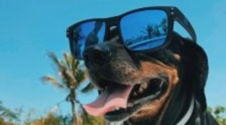 5 consejos para cuidar al perro en plena ola de calor