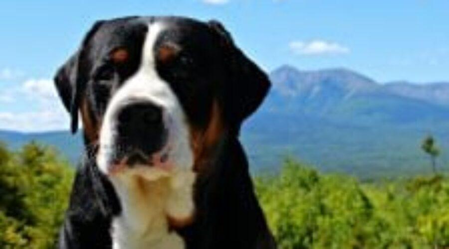 Las 20 mejores frases sobre el perro para reflexionar