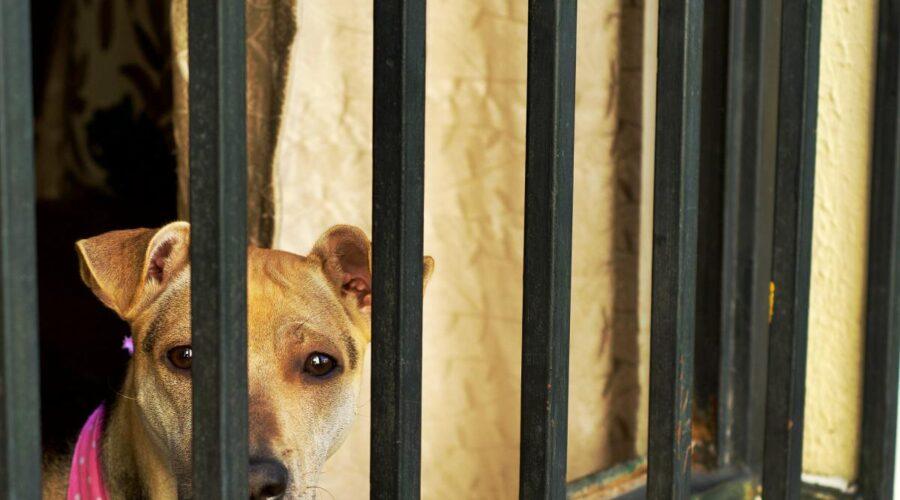 El maltrato animal puede tener su origen en una psicopatía